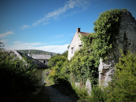 Overgrown houses